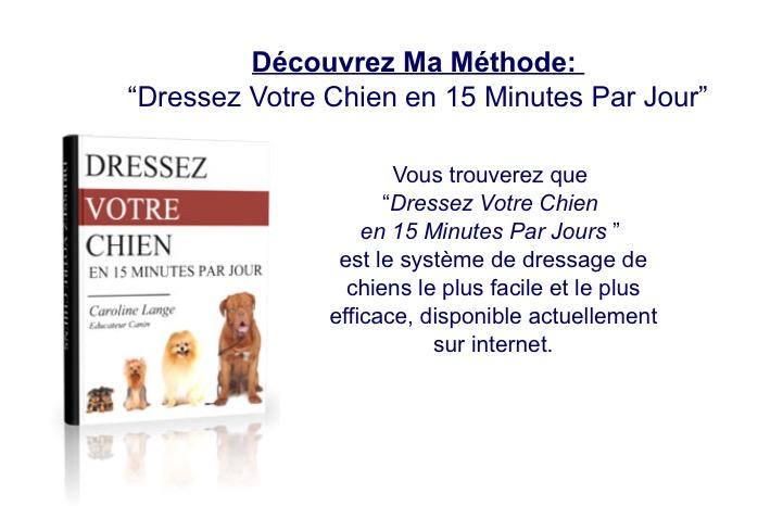 Chien Dresser son Chien Dresser Chiot | DRESSER SON CHIEN